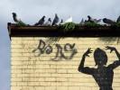 Pigeon-Lined Gutter