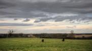 Sheep on a field outside Stadhampton